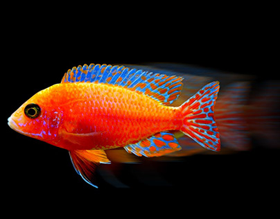Fish With an Added Motion Blur Effect