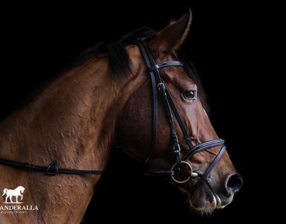 Sikanderalla Equestrians