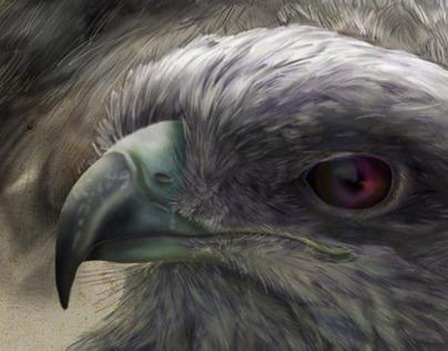 Hawks Illustration