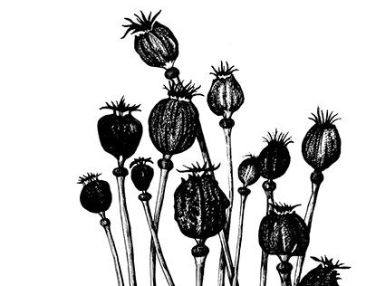 Graphite flora