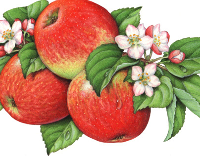 Apple Packaging Illustrations from the Past 30 Years