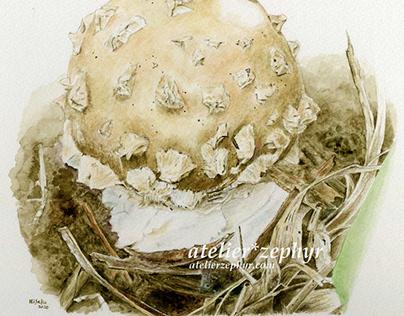 Recent works of biological illustrations