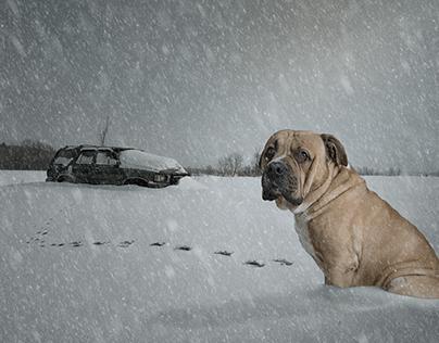 Lost dog.