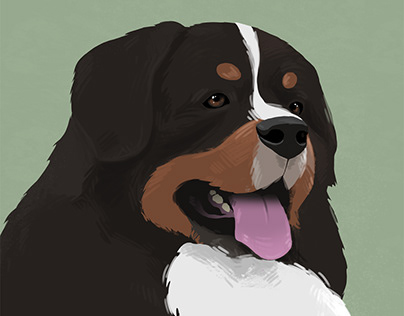Bernese Portrait