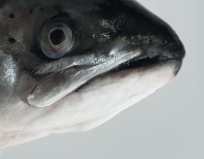 Fish Cup Studio - Personal Branding