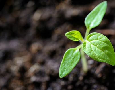 Plantgrowpick Pty Ltd Australia · Photography - Pexels