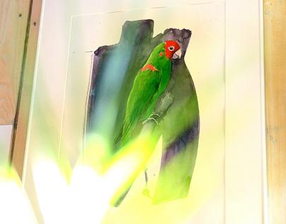 Let birds live