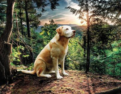 Dog in forest   photo manipulation