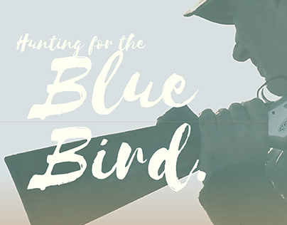 Hunting for the Blue Bird
