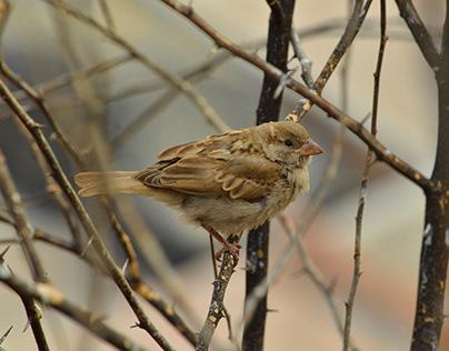 Chirps & Tweets   Bird Photography