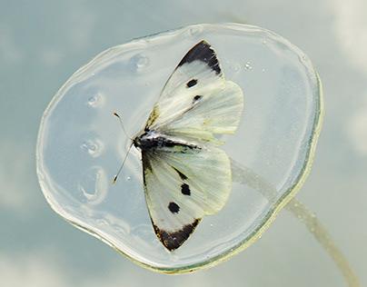 Fly Fly Butterfly II