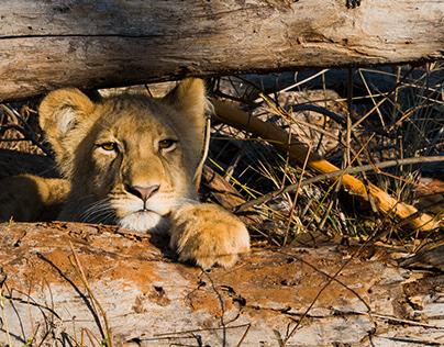 Wildlife-foto