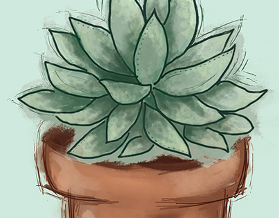 Succulent Trio Illustration