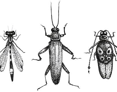 Bugs - Stippling