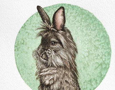 Lionshead Rabbit