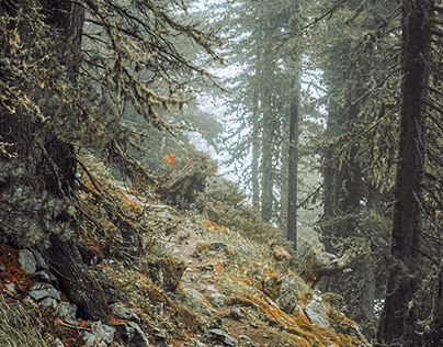 Arolla Forests and trails.