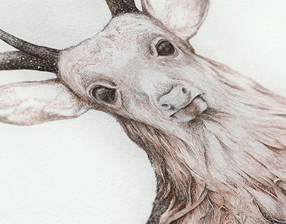 """""""Deer"""" Illustration for a Poem by Juhász Ferenc"""