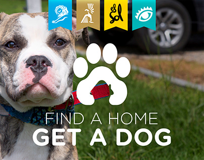 Find a Home / Get a Dog