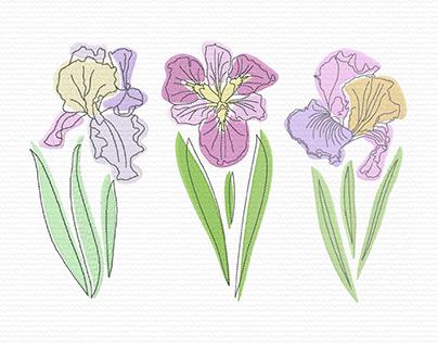 Pastel Irises