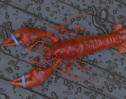Lobster 3d sculpt