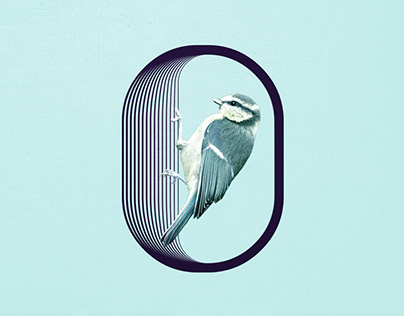 Bird Countdown