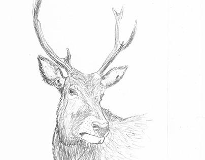 Shade Throwing Elk