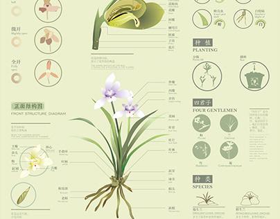 国兰Chinese national orchid diagram