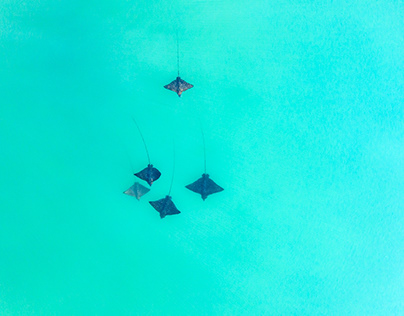 Above the Hawaiian Coastline