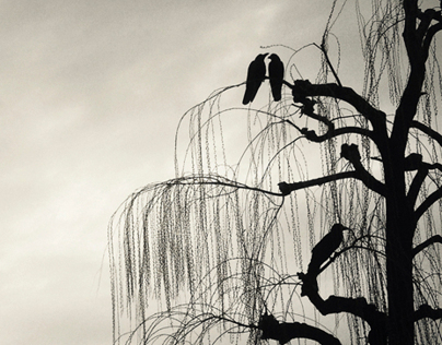 Three Crows, Kyoto | Promo Assignments Postcard