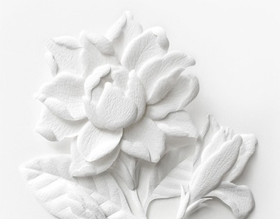 Paper sculpture white thai flowers on behance mightylinksfo
