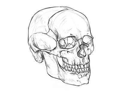 Skull sketch and time-lapse video.