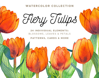 Fiery Tulips Watercolor Collection