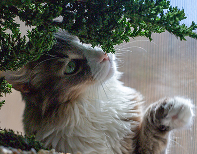 Just A Cat And His Bonsai Tree