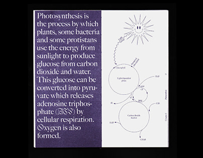 SYMBIOSIS - Could humans photosynthesize?