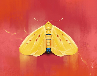 DIGITAL PAINTING MOTH
