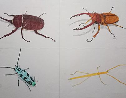 色鉛筆 昆蟲