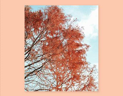 Autumn 2020: Norwich