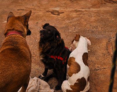 Conversa Canina