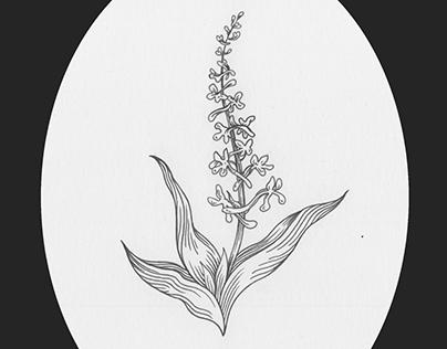The magical herbarium - version II