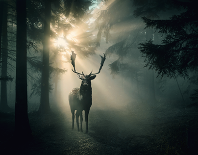 Fallow-deer (photo manipulation)