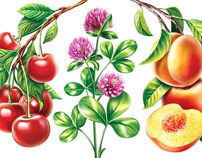 Fruits illustrations for packaging yogurt