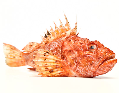 portraits of fish