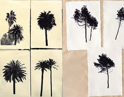 Palm trees & pines