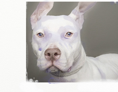 Painted Pets: A New Vitality Of Animals
