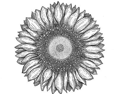 Pen & Ink - Florals