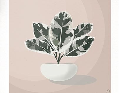 Aesthetic Plant Illustrations