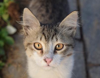 Photography   Stray cats