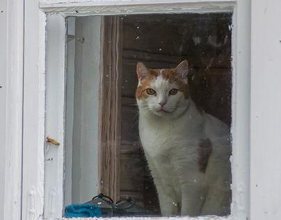 Kitty cat Veikka