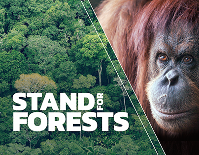 Greenpeace Global Forests Campaign