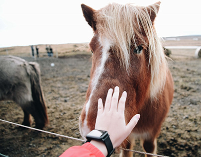 5 Tips for Finding the Best Horse for You